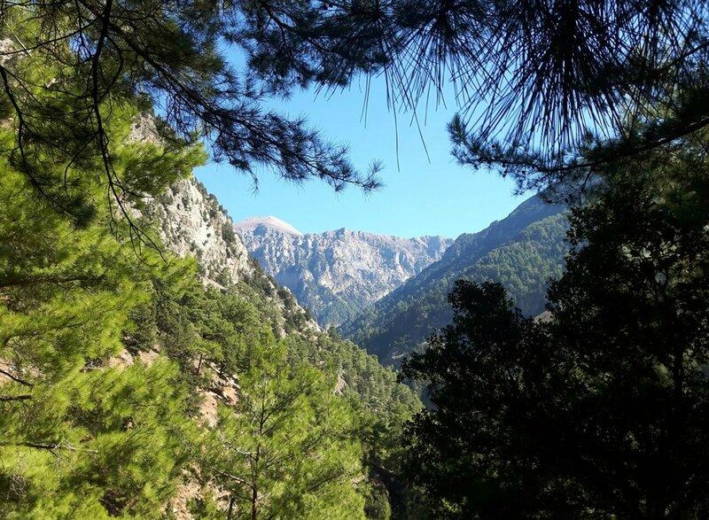 19 Descente, forêt (6)_preview