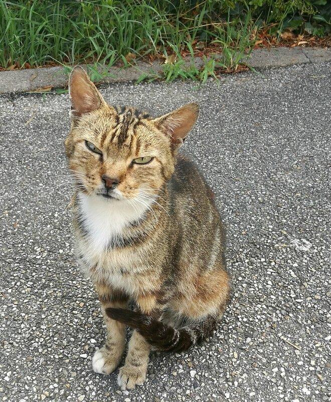 petit chat O-2 (9)