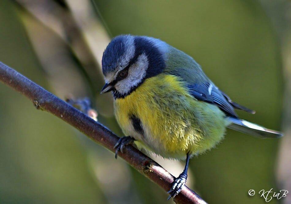 Oiseaux de nos jardins voyage au del d 39 un regard for Oiseaux de jardin au printemps
