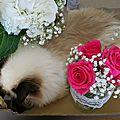 Quelques chines, variation autour d'un bouquet