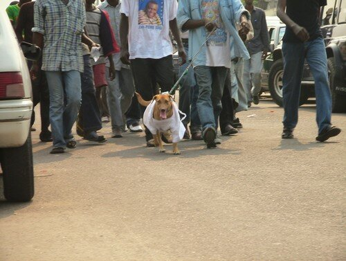 Kabila as a dog mascot of Bemba's supporters