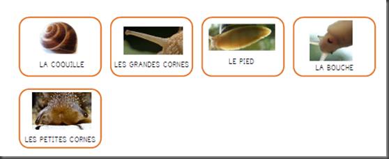 Windows-Live-Writer/Projet-Escargot-Rigolo_D93A/image_thumb_15