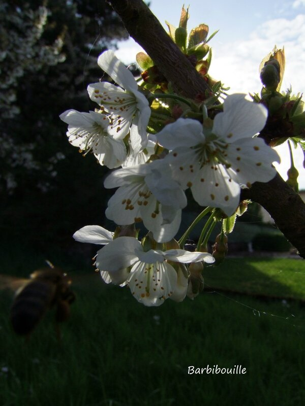 abeille11 Avril14