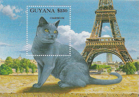 chartreux_guyanne