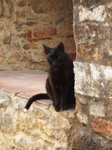 j2_cat