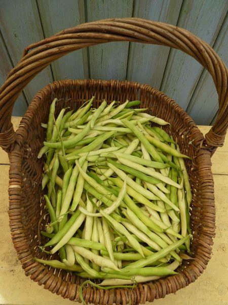 29-haricots secs (3)
