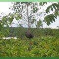 nid de guêpes dans un arbre