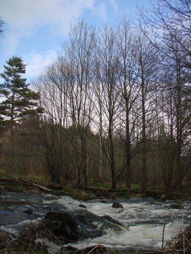 2008 04 23 Une rivère près du Chambon sur Lignon (17)