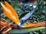 jardin_de_etat_020