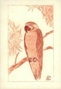 Sanguine perroquet