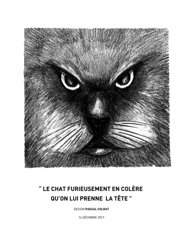 __le_chat_furieusement_en_cole_re__qu_on_lui_prenne__la_te_te__