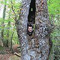 Sortie en forêt pour les CP