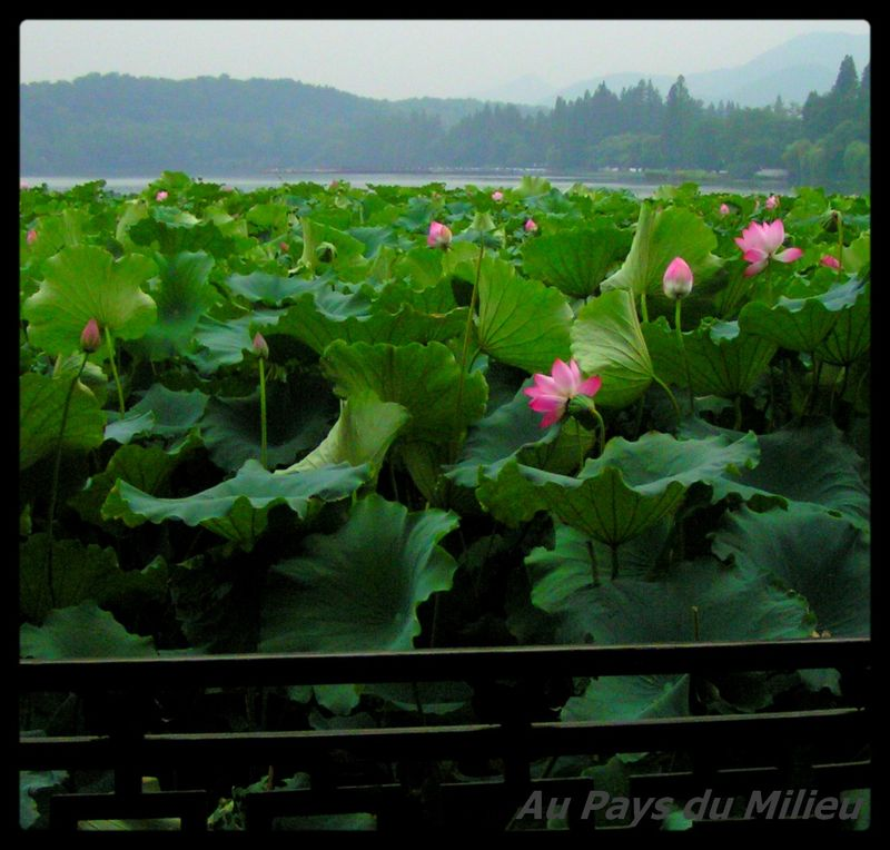 Hangzhou Xihu Saison des Lotus 15