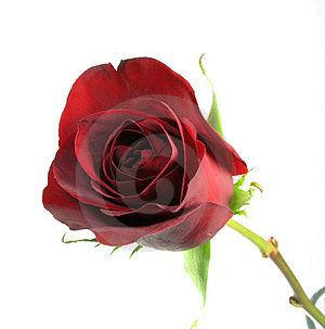 Passion fleurs d veloppement de la rose rochelle for Jardin passion la rochelle 2015