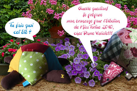 Concours_Miss_Tortue