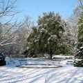 Le jardin botanique de Tours sous la neige