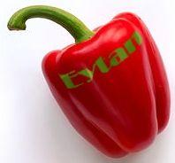 poivron Eytan
