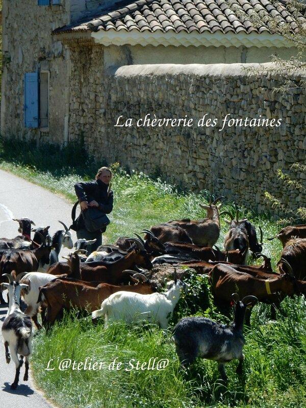La chèvrerie des fontaines 1