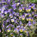 Fiusonnement de fleurs mauve et jaune