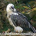 Samedi 5 septembre 2015 : une journée pour défendre et protéger les vautours