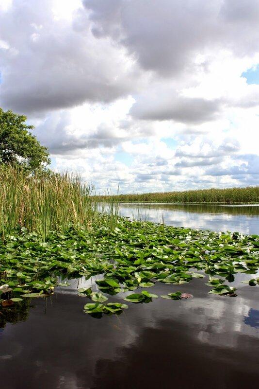 J24 - 21 juillet 2014 Everglades (110).JPG