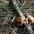 Les escargots sortent dès que le temps est humide…