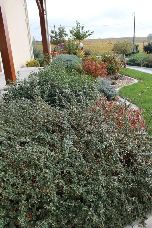 Mon jardin en automne mon jardin mois apr s mois - Jardin taille olivier ...