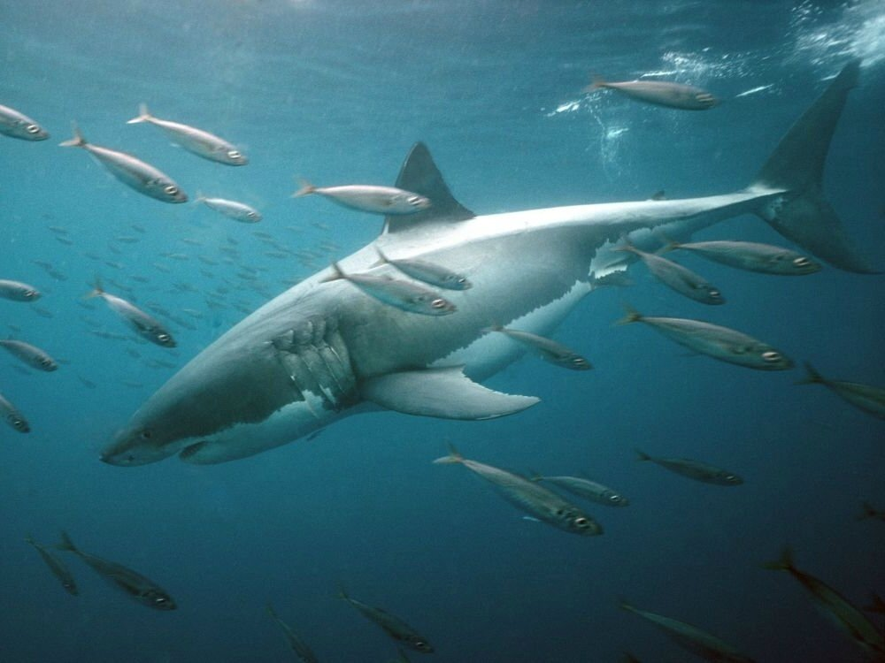 Le plus vieux réseau social du monde invinté par les requins.
