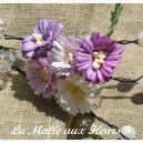 paquerette mix violet