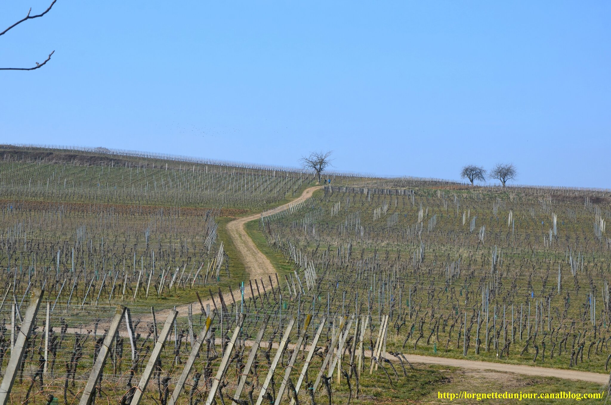 25/03/14 : Le vignoble de la Couronne d'or
