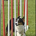 Concours Agility Thoiry - 20/5/12
