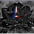 rose Noireparis