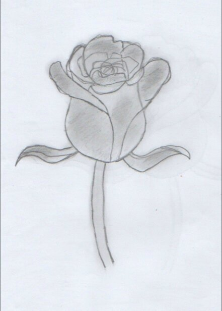 Rose 2 loulou un amour de dessin - Rose facile a dessiner ...