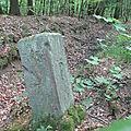 Forêt de Lauw