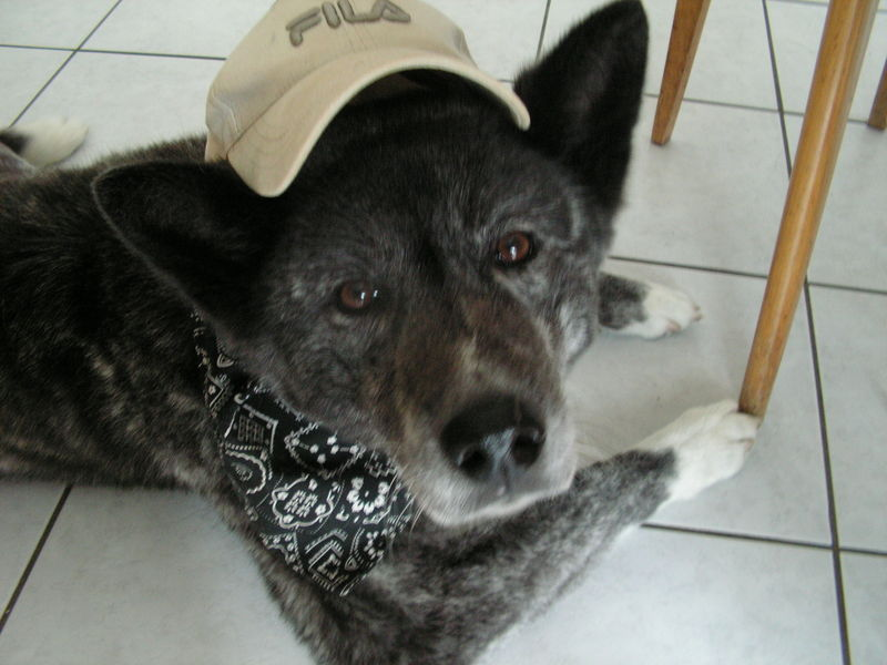 mon chien d 39 amour s 39 en va nekozone. Black Bedroom Furniture Sets. Home Design Ideas