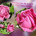 balanicole_2016_02_fevrier_rosiers1_30_isaac Pereire3
