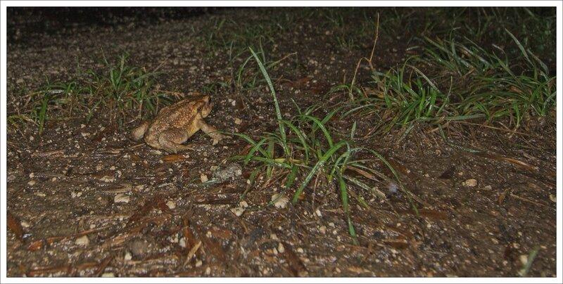 ville nuit pluie crapaud herbe 080815 2