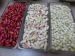 16-haricots demi secs (6)