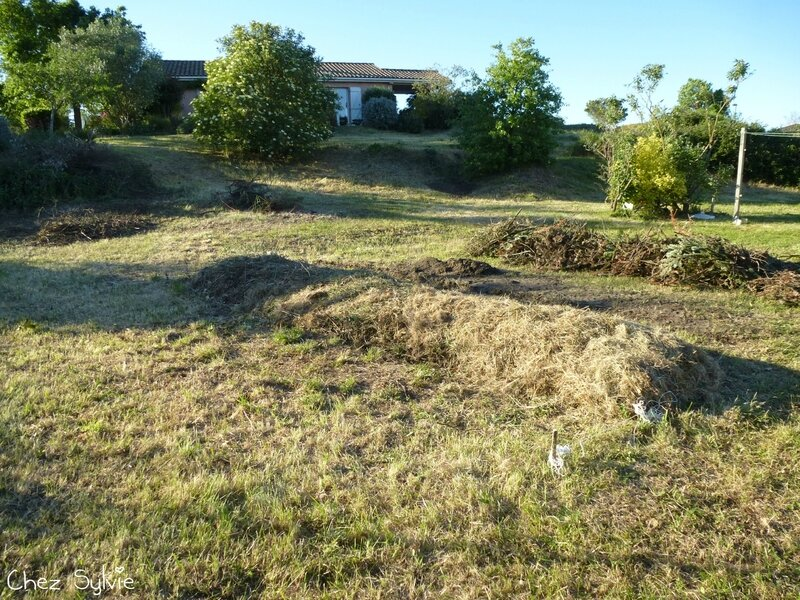 Potager permaculture 16