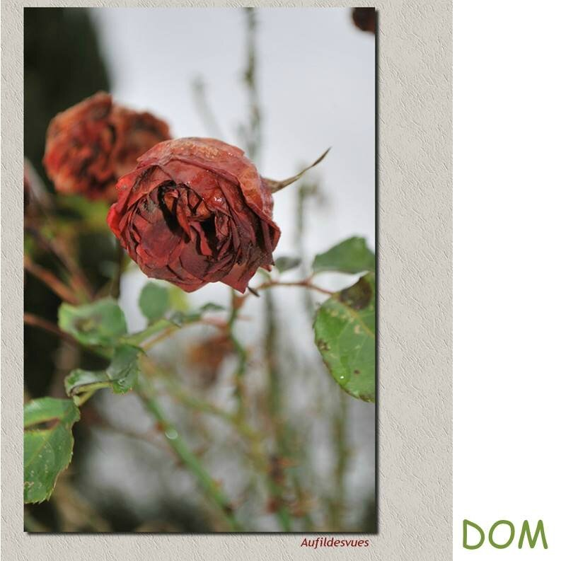 dom 1