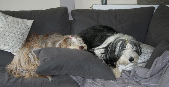 lovées dans le canapé