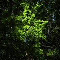 Forêt au dessus des gorges du Méaudret