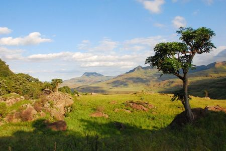 Afrique du Sud (985)