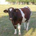 Un petit bol d'air au pays des vaches blanches et noires !