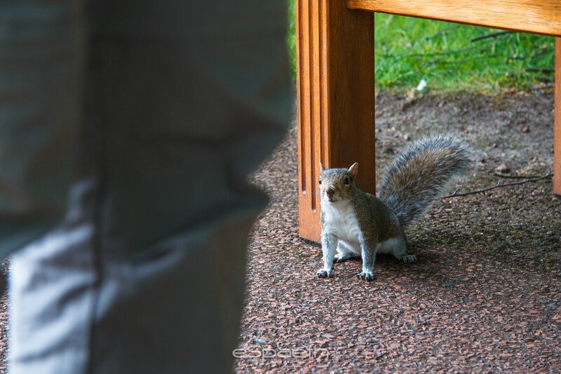 Edinburgh Royal Botanic Garden Squirrel