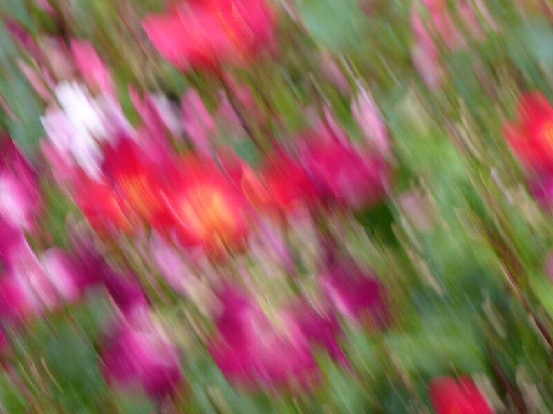 flou-roses