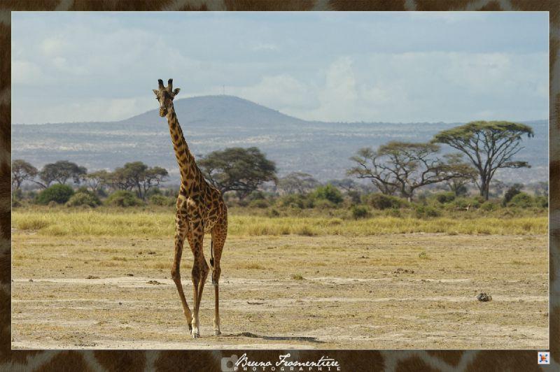 Kenya 6b