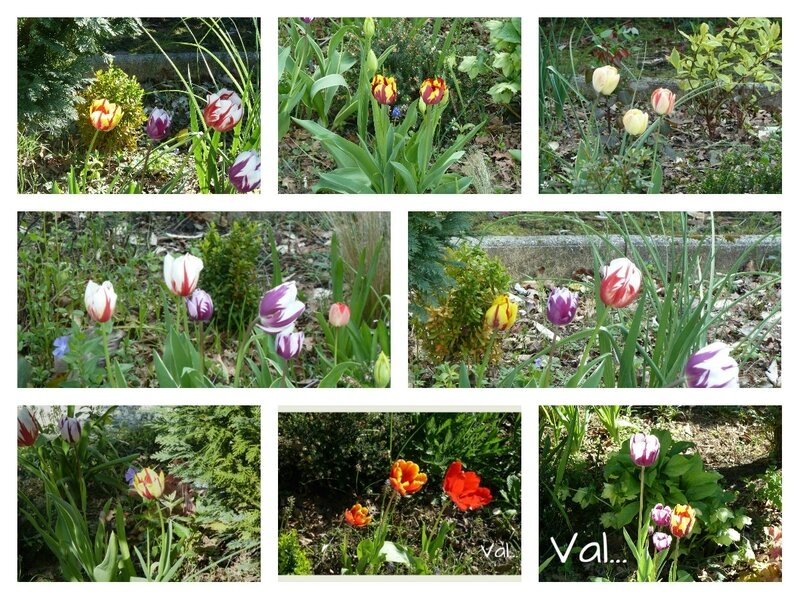 collagetulipes04