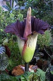 Grosse fleur