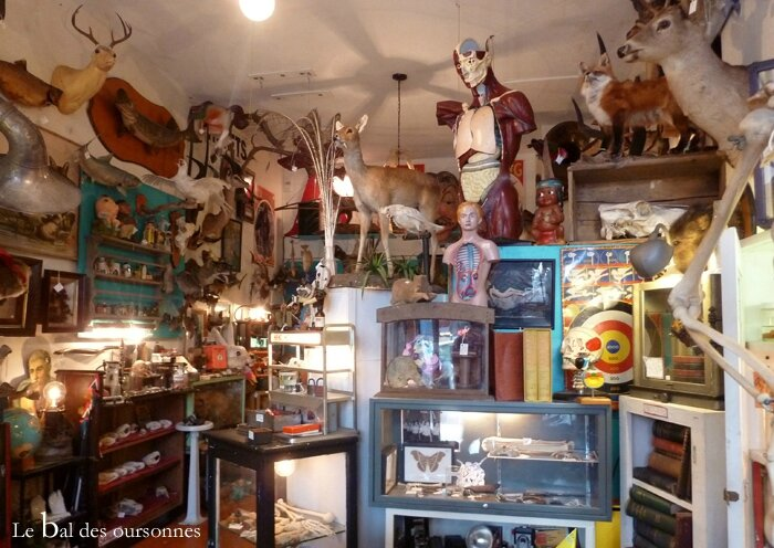 99 Blog Vintage Woolly Mammoth Ravenswood Curiosity Shop